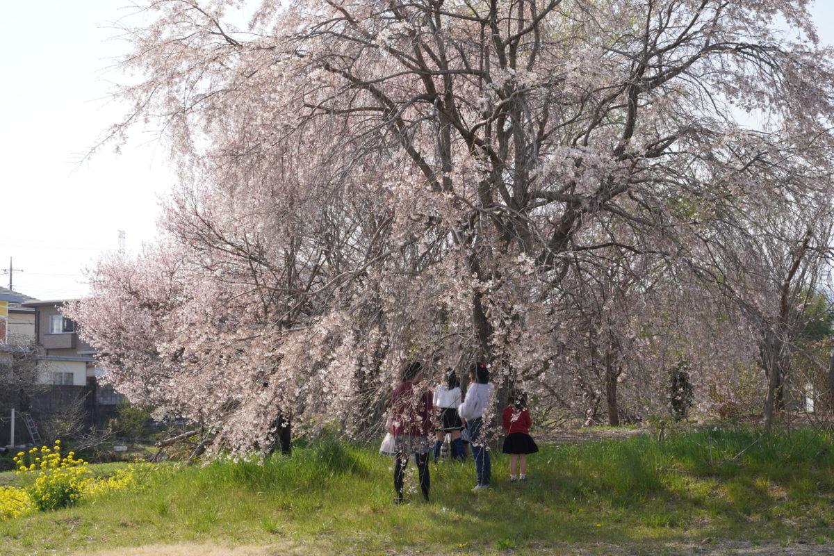フランシスコの町の春