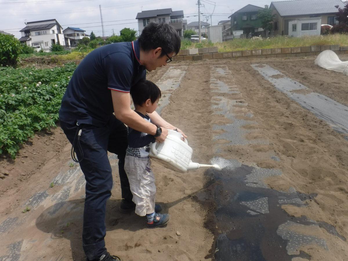 トウモロコシを植えました。